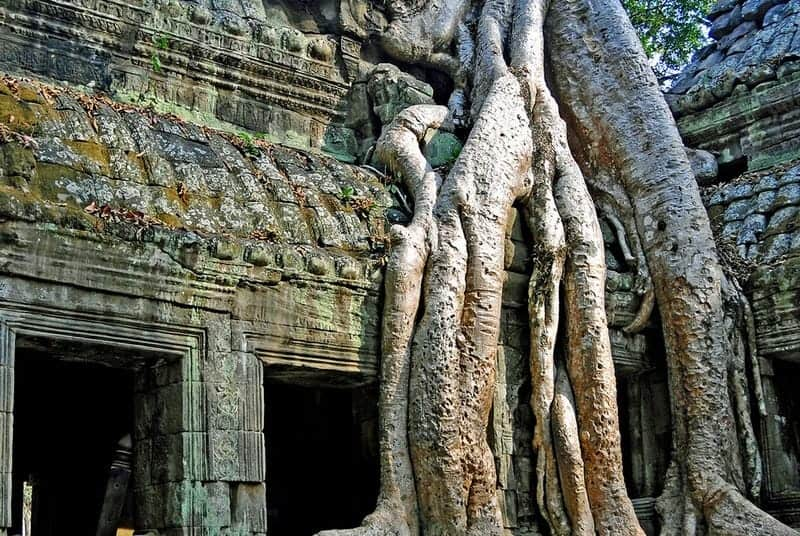 Ta Prohm Temple Guide